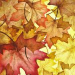 Fall Maple Leaves Painting Christina