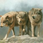 Famous Wolf Paintings Quotes