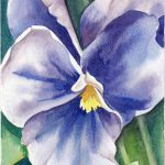 Items Similar Watercolor Flower Painting Blue Pansy Bloom