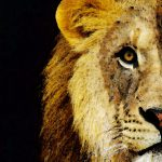 Lion Art Face Off Painting Sharon