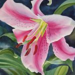 Pink White Lily Painting Sharon
