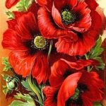 Poppies Flowers Reviews