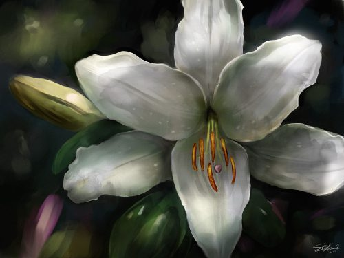 Stargazer Lily Painting Marks Year Anniversary Steve Goad
