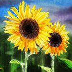 Stunning Sunflower Paintings Artwork Sale Fine Art