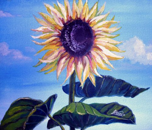 Sunflower Alban
