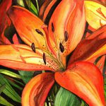 Tiger Lilies Elaine