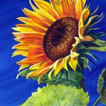 Watercolors Sale Cheryl Johnson Campton New Hampshire Art