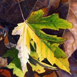 Yellow Leaf Art Watercolor Painting Print Cathy